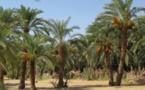 La ''Guetna'' dans la wilaya de l'Adrar une saison de repos et de détente