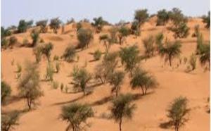 AGLC de Liweyssi : Sur le chemin de la reconnaissance