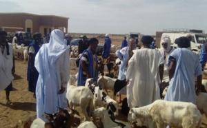 Zouerate : éleveurs et bouchers protestent contre l'application de nouvelles taxes municipales